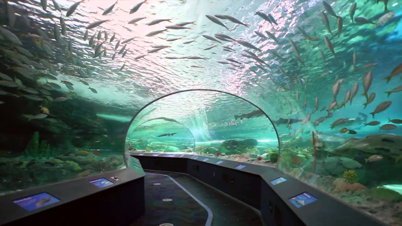 Ripley's Aquarium in Toronto, Canada