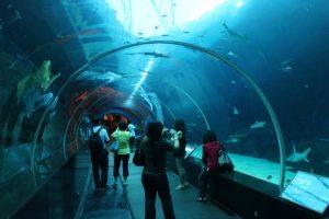 6 Incredible Aquariums Around the World